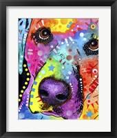 Framed Closeup Labrador