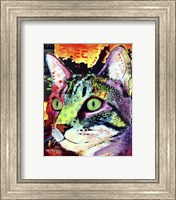 Framed Curiosity Cat