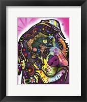 Framed Rottie