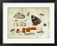 Framed Butterflies, Insects, and Currants