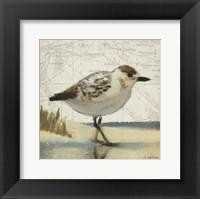 Framed Beach Bird I