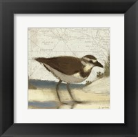 Framed Beach Bird III