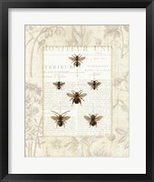 Framed Bee Botanical