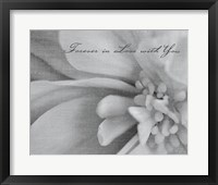 Framed Aimer III