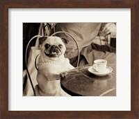 Framed Cafe Pug