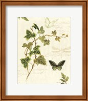 Framed Ivies and Ferns IV