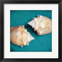 Framed Two Shells I