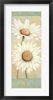 Beautiful Daisies I Framed Print