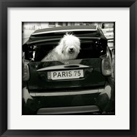 Framed Paris Dog I