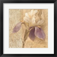Framed Brocade Iris