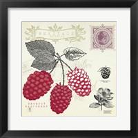 Raspberry Notes Framed Print