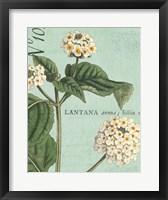 Botanique Bleu I Framed Print
