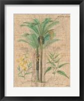 Palm Study II Framed Print