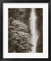 Framed Multnomah Falls