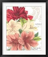 Framed Azalee Jardin II