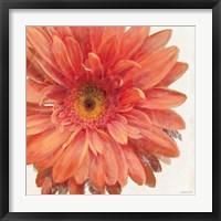 Framed Vivid Daisy