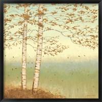 Framed Golden Birch I with Blue Sky