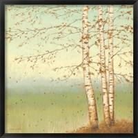 Framed Golden Birch II with Blue Sky