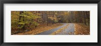 Framed Road passing through autumn forest, Great Smoky Mountains National Park, Cherokee, North Carolina, USA