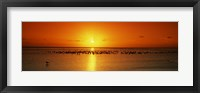 Framed Flock of seagulls on the beach at sunset, South Padre Island, Texas, USA
