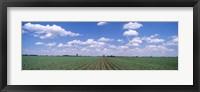 Framed Cornfield, Marion County, Illinois, USA