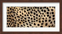 Framed Close-up of the spots on a cheetah