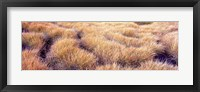Framed Dry grass in a national park, South Fork Cascade Canyon, Grand Teton National Park, Wyoming, USA
