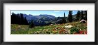 Framed Wildflowers in a field, Rendezvous Mountain, Teton Range, Grand Teton National Park, Wyoming, USA