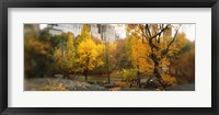 Framed Autumn trees in a park, Central Park, Manhattan, New York City, New York State, USA