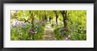 Framed Laburnum trees at Barnsley House Gardens, Gloucestershire, England