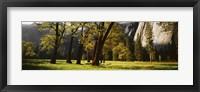 Framed Trees near the El Capitan, Yosemite National Park, California, USA