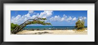 Framed Divi divi tree (Caesalpinia Coriaria) at the coast, Aruba