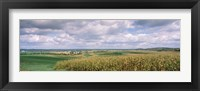 Framed Corn and Alfalfa Fields, Wisconsin