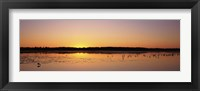 Framed Pelicans and other wading birds at sunset, J.N. Ding Darling National Wildlife Refuge, Sanibel Island, Florida, USA