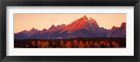Framed Aspens, Teton Range, Grand Teton National Park, Wyoming, USA