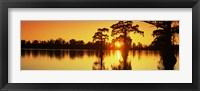 Framed Cypress trees at sunset, Horseshoe Lake Conservation Area, Alexander County, Illinois, USA