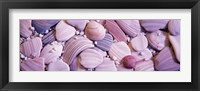 Framed Close-up of seashells