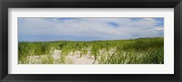 Framed Sand dunes at Crane Beach, Ipswich, Essex County, Massachusetts, USA