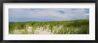Framed Sand dunes at Crane Beach, Ipswich, Essex County, Massachusetts, USA