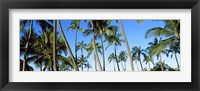 Framed Low angle view of palm trees, Oahu, Hawaii, USA