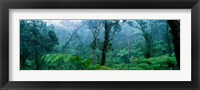 Framed Trees in a rainforest, Hawaii Volcanoes National Park, Big Island, Hawaii, USA