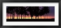 Framed Silhouette of palm trees on the beach, Puuhonua o Honaunau National Historical Park, Big Island, Hawaii, USA