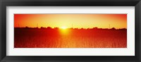 Framed Soybean field at sunset, Wood County, Ohio, USA