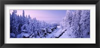 Framed Snow covered trees in a forest, Imatra, Finland