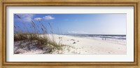 Framed Tall grass on the beach, Perdido Key Area, Gulf Islands National Seashore, Pensacola, Florida, USA