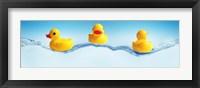 Framed Three ducks on water