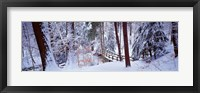 Framed Winter footbridge Cleveland Metro Parks, Cleveland OH USA