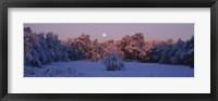 Framed Snow covered forest at dawn, Denver, Colorado, USA
