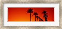 Framed Silhouette of Date Palm trees in a row at dawn, Phoenix, Arizona, USA