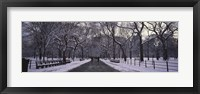 Framed Bare trees in a park, Central Park, New York City, New York State, USA